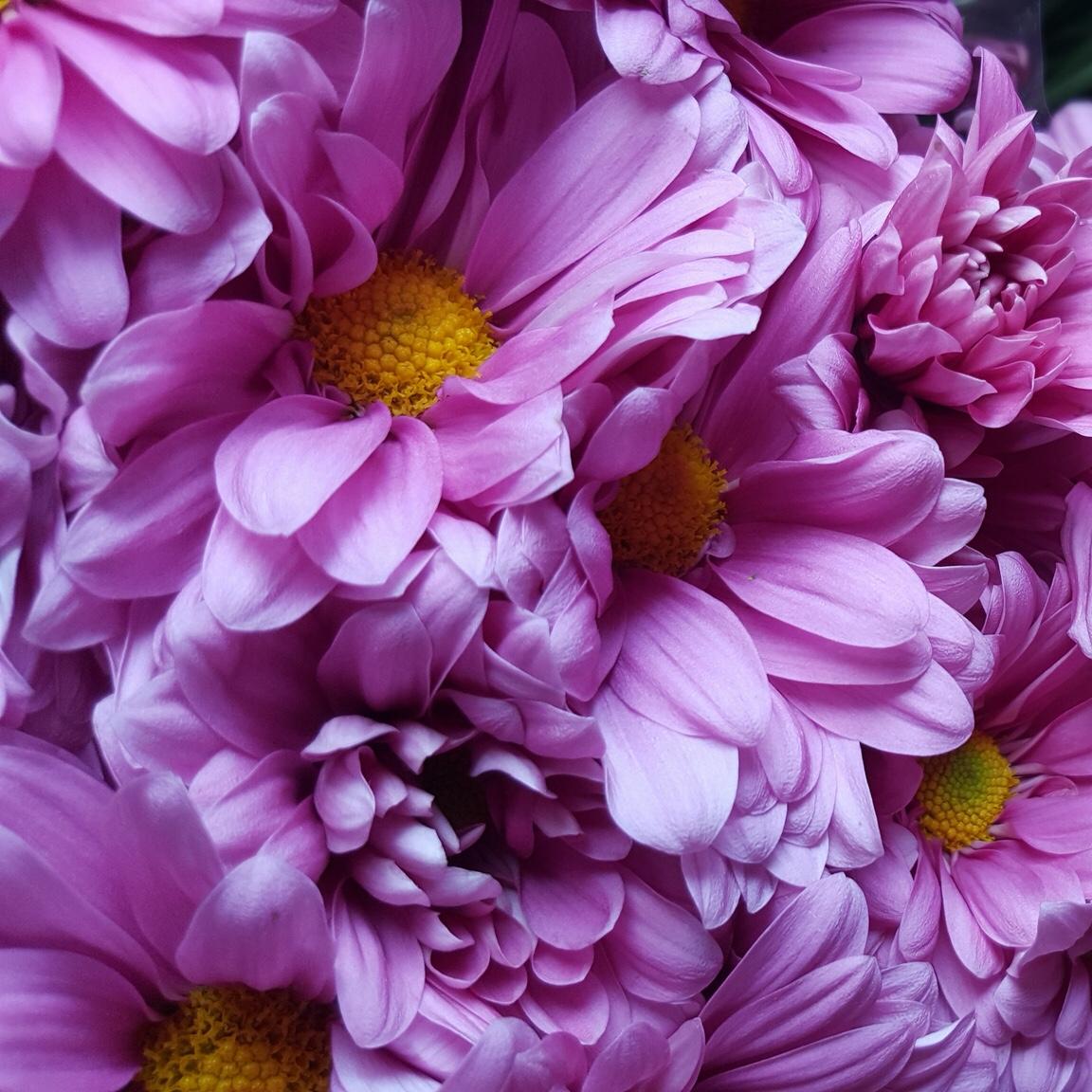 что картинки для самсунга с цветами раннего