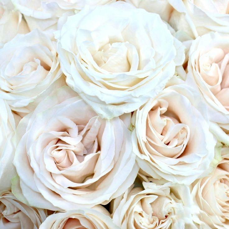 вал располагается венделла роза фото что условиях ограниченного